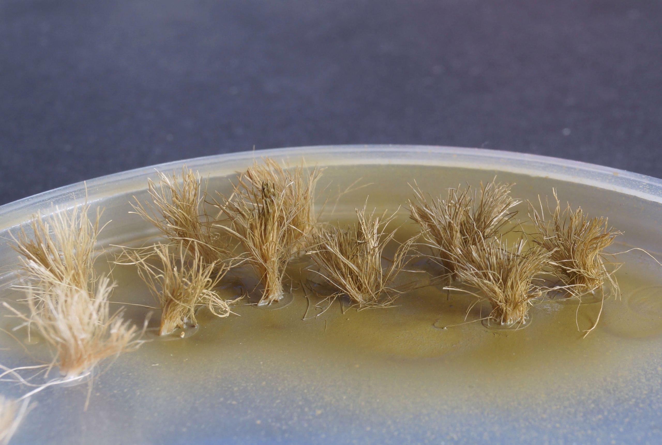 Делаем пучки травы из подручных материалов - красим